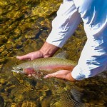 Catch and release Guided Fly Fishing Trips