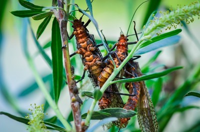 Bug Hatches