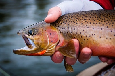 Montana fly fishing guides -Rock Creek