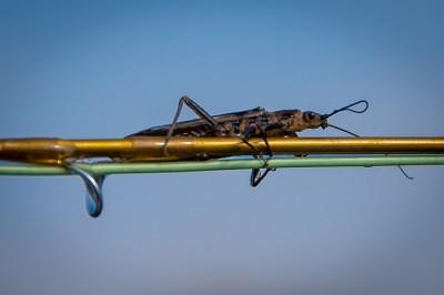 Missoula fly fishing, the skwala stonefly