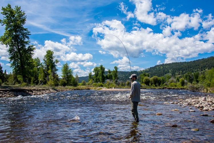 missoula dry fly fishing summer season montana trout