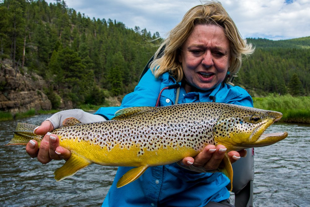 Brown trout on the smith river montana trout outfitters for Smith river fishing report