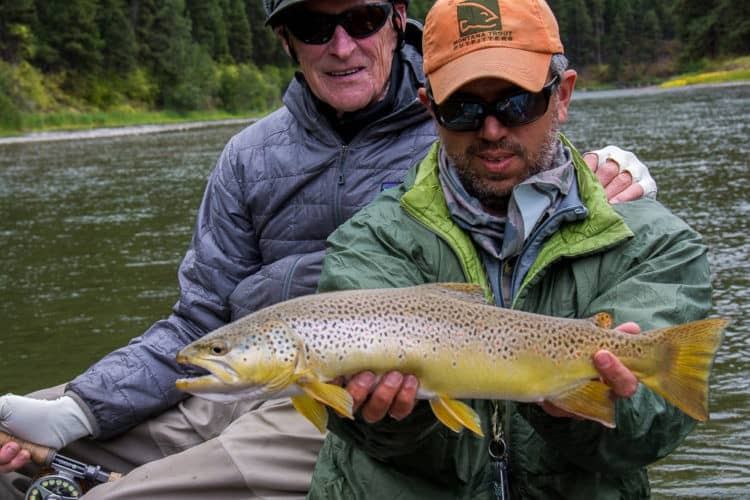 image of Fall Brown Trout