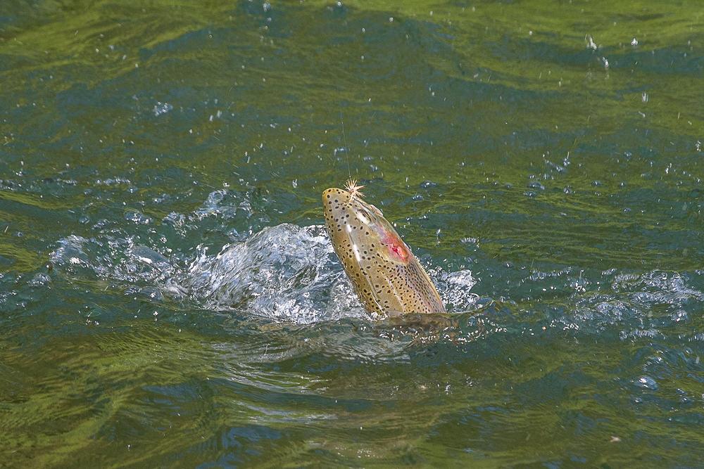 Missoula fly fishing blog montana trout outfitters for Missoula montana fly fishing