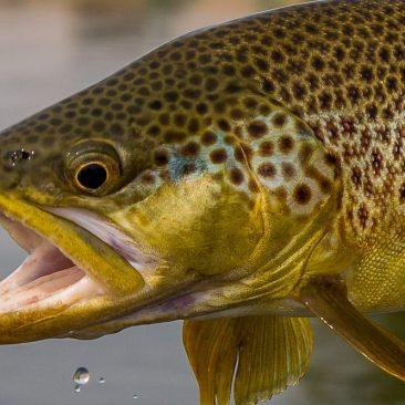 image of fall fishing in Missoula