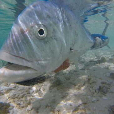 image of fly fishing the Seychelles