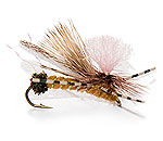 Dry Fly Golden Stone Fly