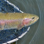 trout fishing guide