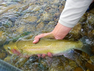 Montana fly fishing guides - small creeks and mountain lakes
