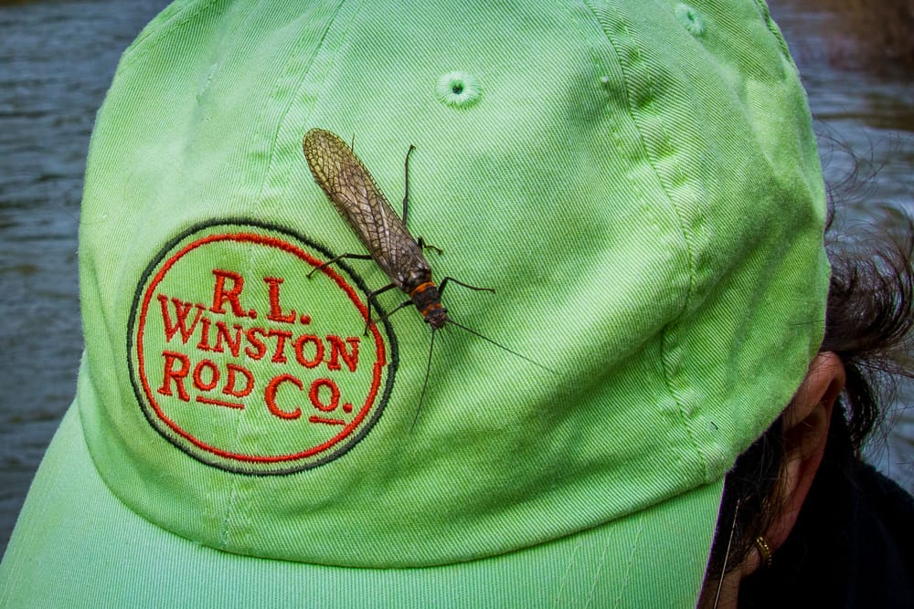 Montana Fly Fishing Hatches - Montana Fly Fishing Tips with Fly Hatches including skwala stoneflies, caddis, hoppers, and salmonflies.