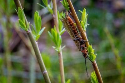 image of Missoula Stonefly Hatches