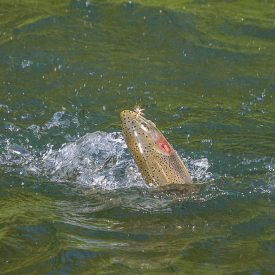 image of August fly fishing in Missoula