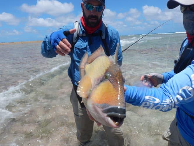 image of Triggerfish
