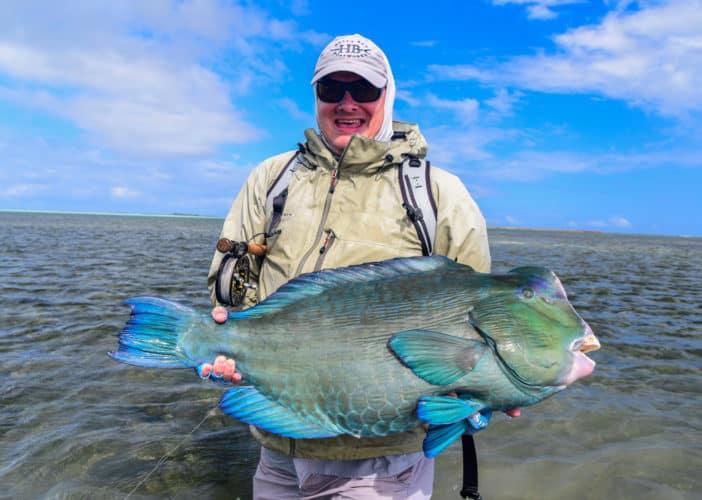 image of Bumphead Parrotfish