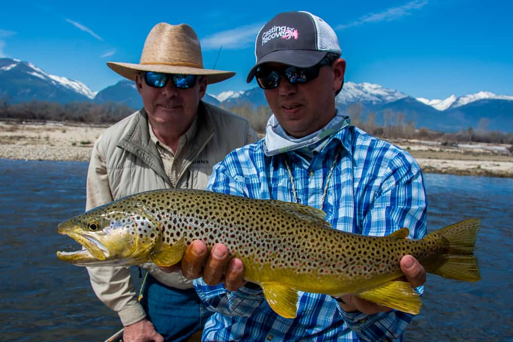 Brown trout during the spring skwala hatch