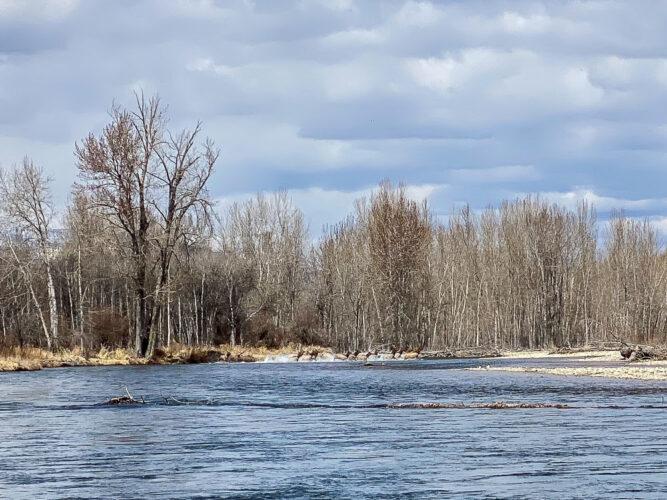 Elk charging across the Bitterroot River