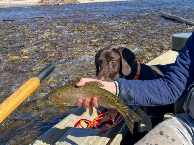 Hank the trout inspector