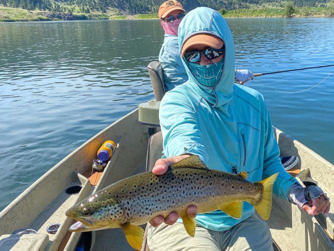 Nice upper Missouri river brown trout for Dianne