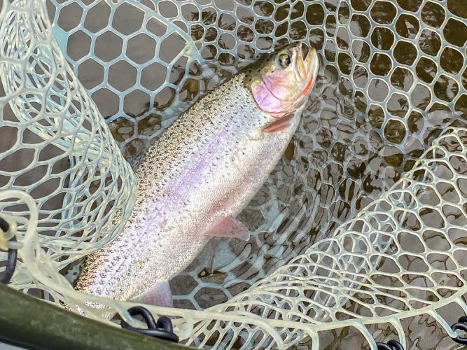 Lots of quality fish today - Trout Fishing Montana