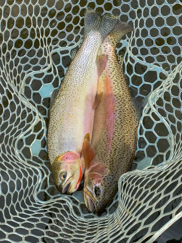 The doubles continued into the afternoon - Trout Fishing Montana