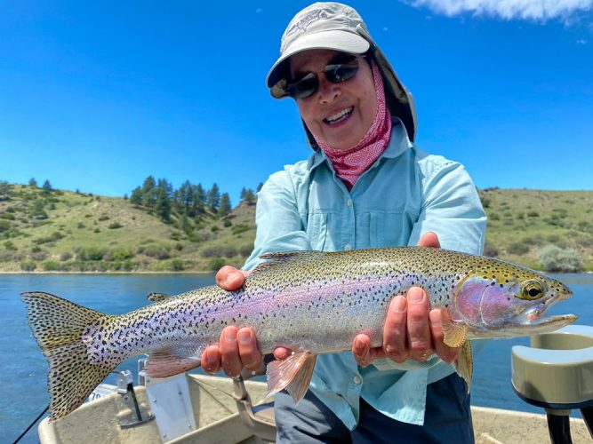 These Missouri River Rainbow Trout are big and pretty this time of year