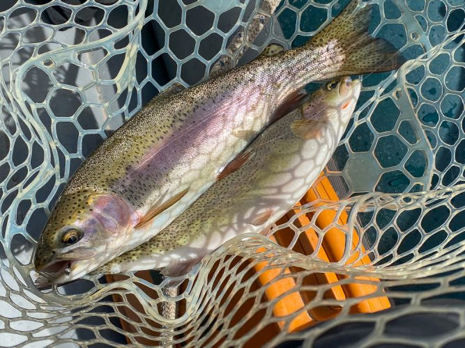 First of several doubles - Missoula Trout Fishing