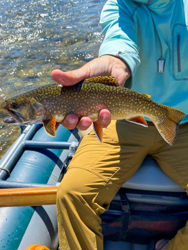 Dianne with a nice brook trout on the dry fly - Missoula Trout Fishing