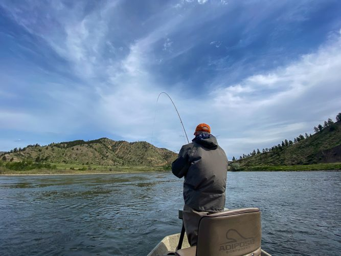 Randy hooked up to a hot fish - Best Montana Fishing Guide