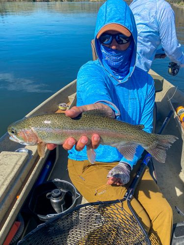 Quality rainbow trout for Dianne