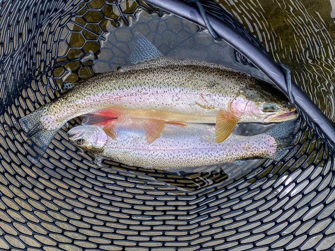 Jim and Randy put some doubles in the net too - Best Montana Fishing Guide